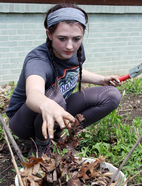 Harold Aughton/Butler Eagle: Jazzmin Penaskovic, a junior at Slippery Rock University, joined a group volunteers to pull weeds, rake leaves and put down mulch as part of an Earth Day spring clean up day at Moraine State Park.