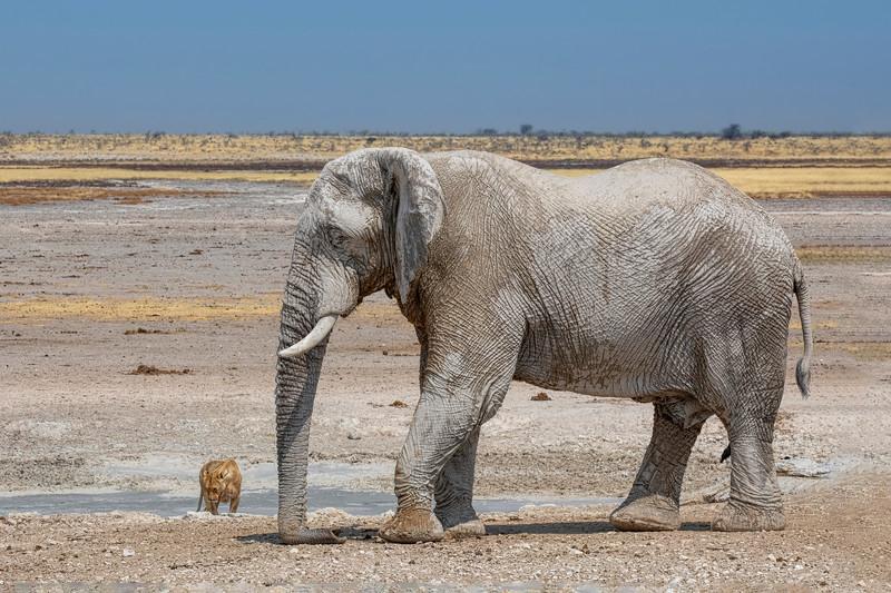 Namibia 69A8396c.jpg