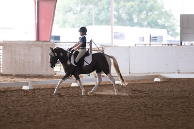 Horse 356