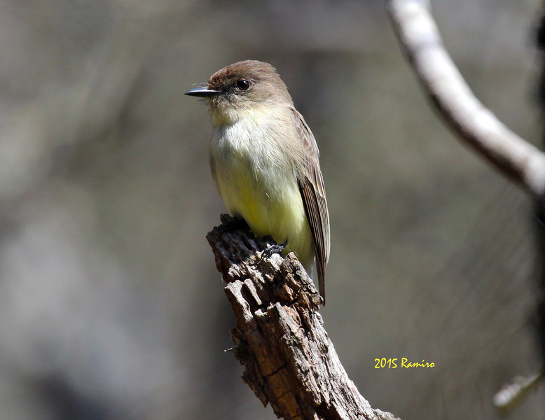 Bird 3-7-15 207.jpg