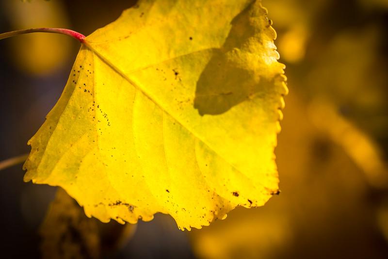 20151024-Fall Colors-56.jpg