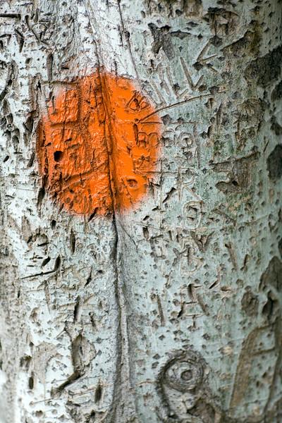 Carvings on a tree bark, Seville, Spain