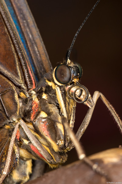 Butterfly Place – Detail 2