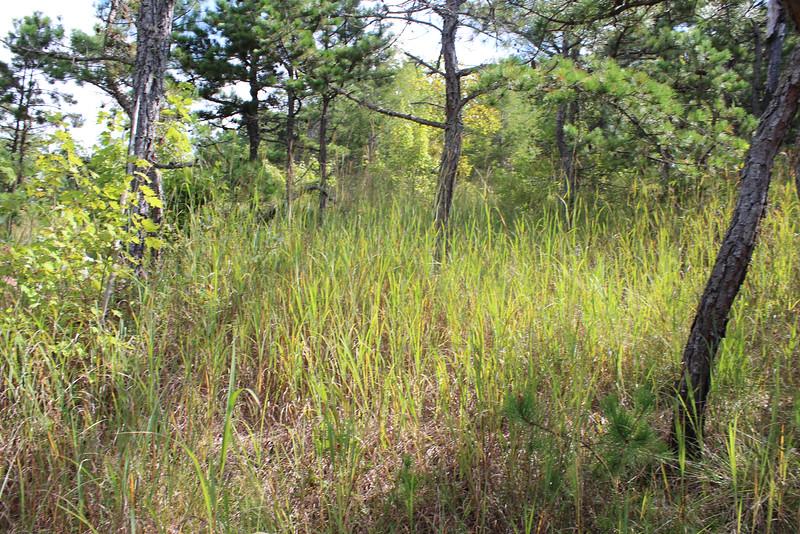 Buck Creek 086.jpg