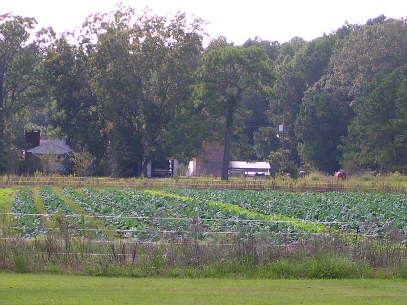 nc holden farms 003