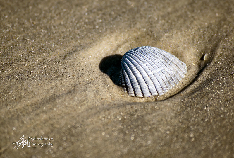 Galveston Beach 3Nov2018