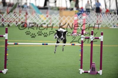 Dauphin Dog Training Club AKC Agility Trial October 20-21