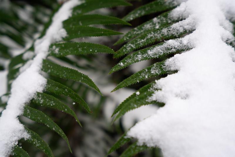 19_02_03 snow day in north van 0142.jpg