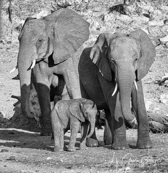 Elephants Botswana-10.jpg