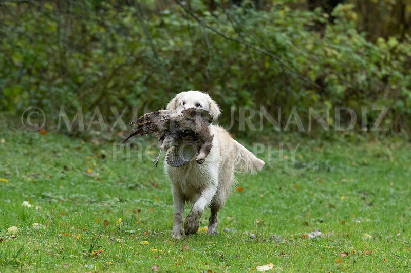 Dogs-4735.jpg