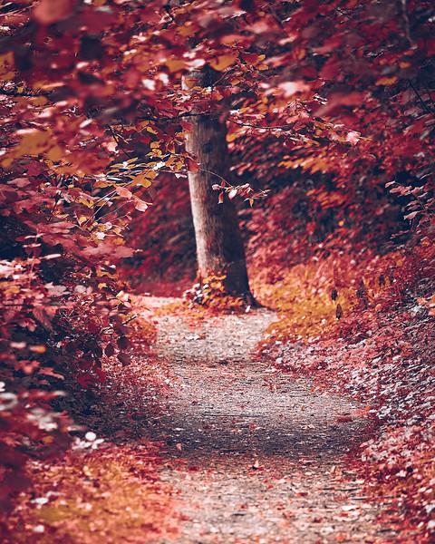 red-path.jpg