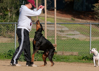 Are You Bigger than Than a Doberman?