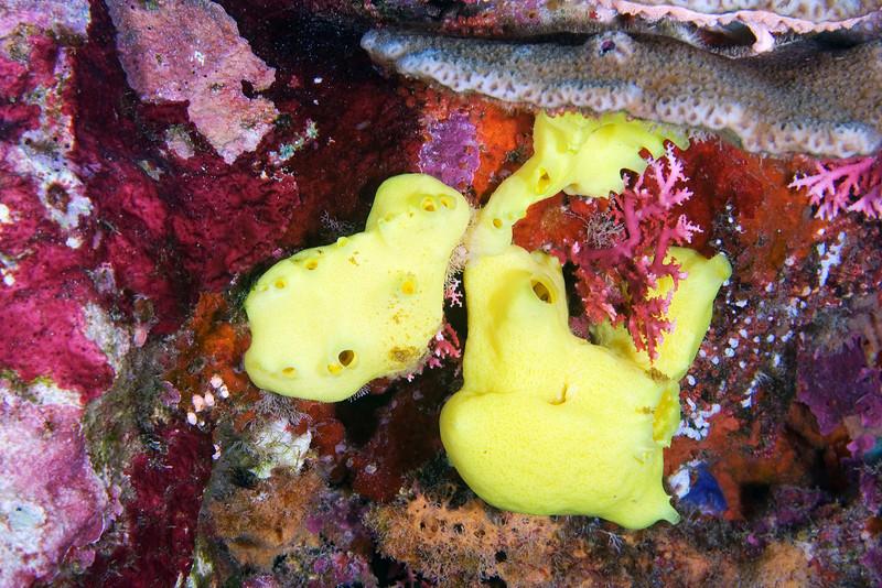 Yellow Sponge 2.jpg