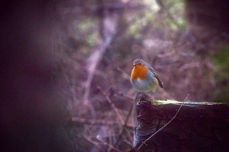 Robin in view.jpeg