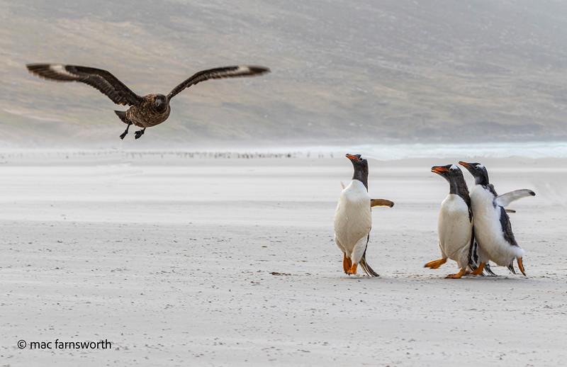 antartica-5-2.jpg