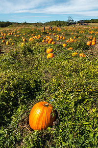 Autumn 2015 - New Hampshire