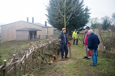 Feb 2018 - Hedge Laying