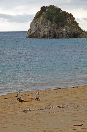 3 Gannets.jpg