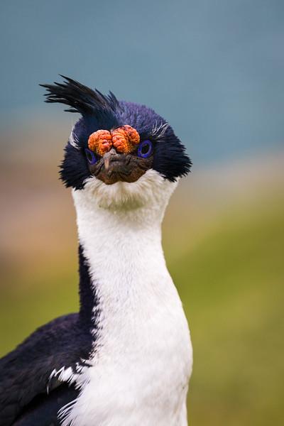 Falklands and South Georgia 2014