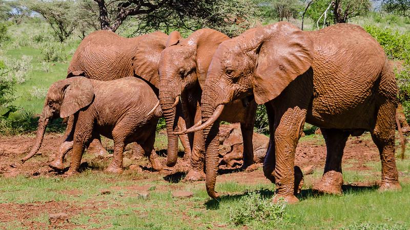 Elephants-0205.jpg
