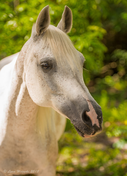 Equestrian Center Horse Rescue, Inc.