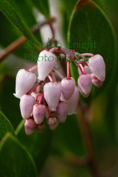 Medicinal Botanicals