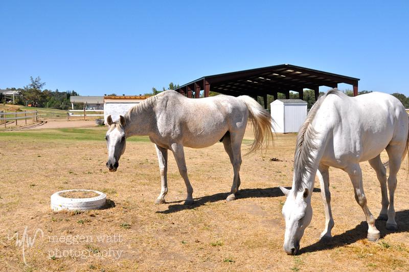 EB&Horses-044.jpg