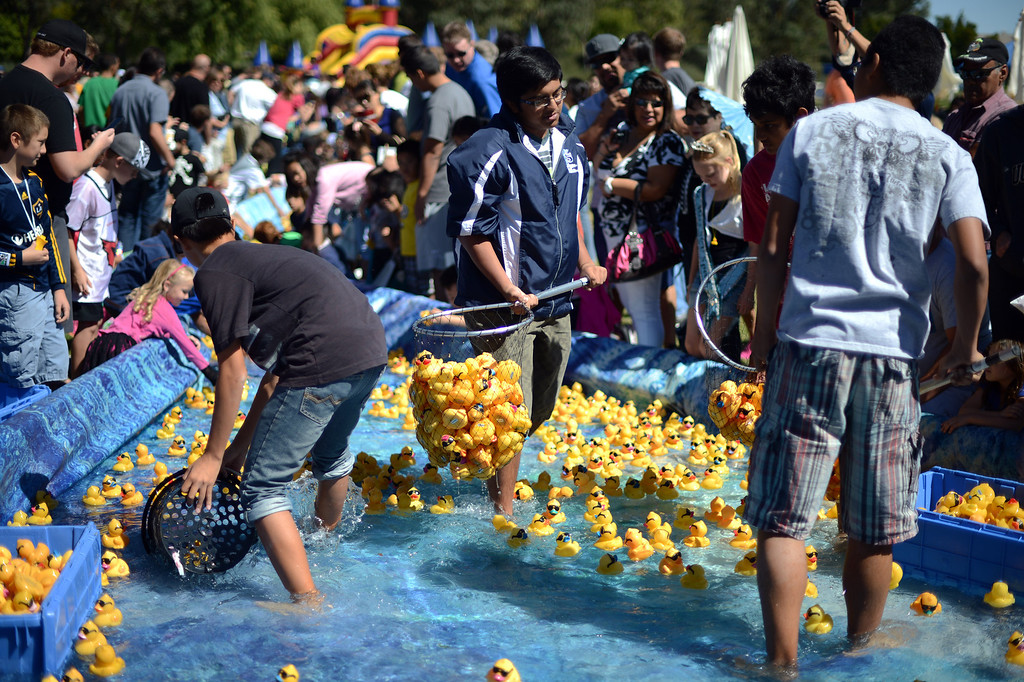 . Rubber ducks are collected during the  Samuel Dixon Family Health Centers\' 11th annual Rubber Ducky Regatta at Bridgeport Park in Santa Clarita Saturday, October 5, 2013.  The event raises money for charity to help uninsured and underinsured patient care. (Photo by Hans Gutknecht/Los Angeles Daily News)