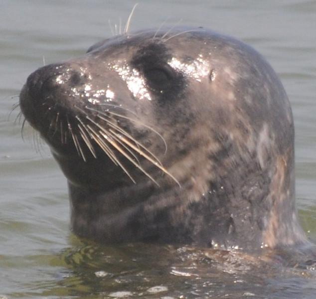 bird,seal,family 098.JPG