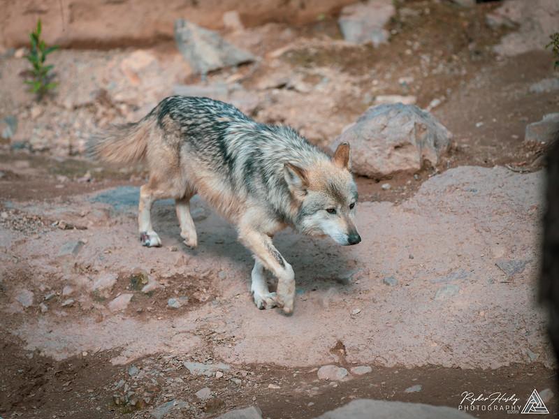 Arizona-Sonora Desert Museum-145.jpg