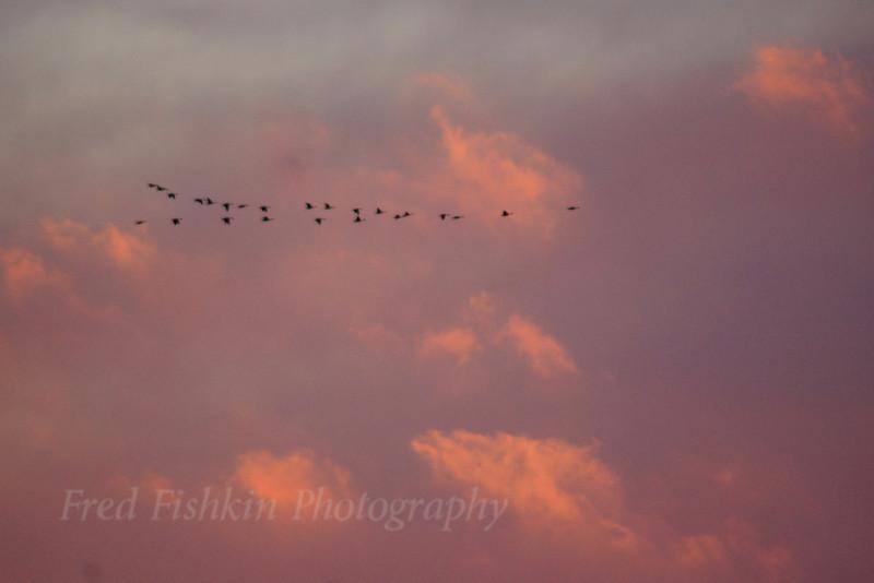 Geese sunset.jpg