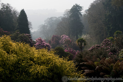 Trebah Gardens 28-03-11