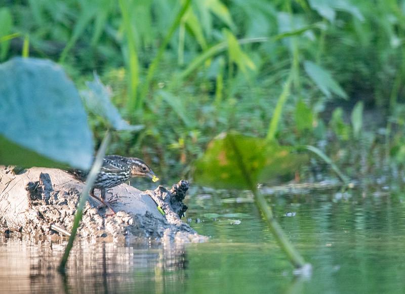 2019-07-12 NJ-Kayaking Wallkill River-DSC_6519-015.jpg