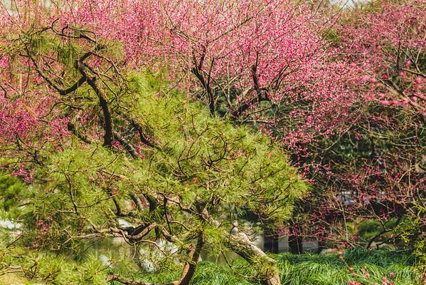 2014 Spring in Hangzhou