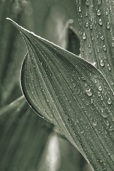 Lt Green Plant.jpg