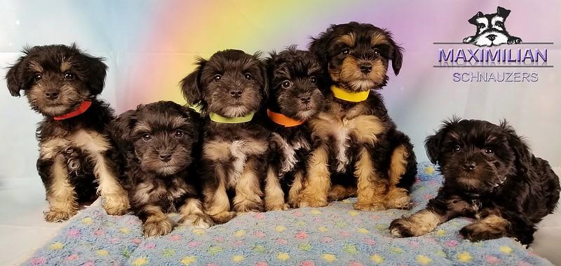 Yanabell Pups 033.jpg
