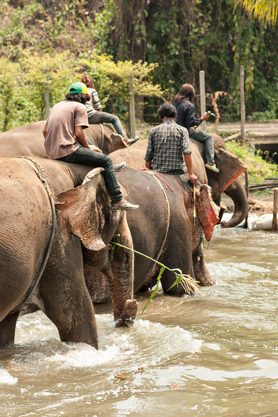 The mahouts bringing their elephants to drink, and for us to bathe.