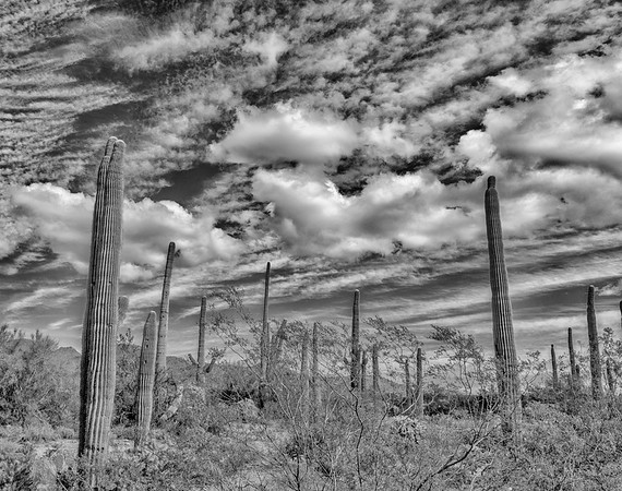 Arizona Black and White Gallery