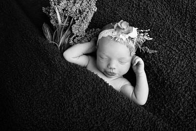 Cora {Newborn}