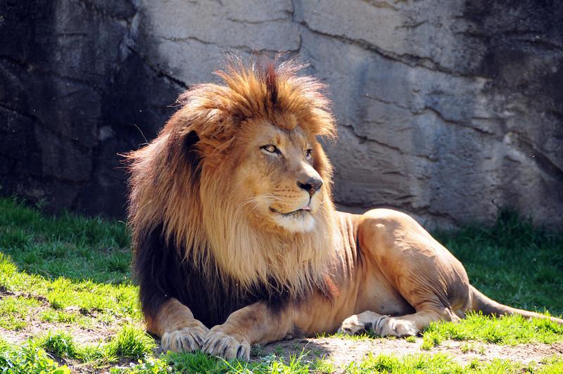 20100303_zoo_565.JPG