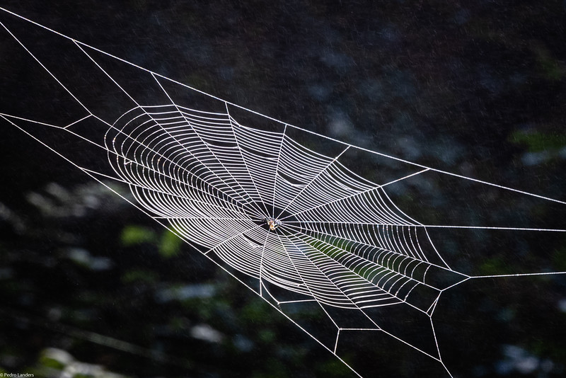 Another Spider's Web