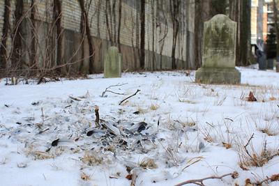Edgewater Cemetery, NJ