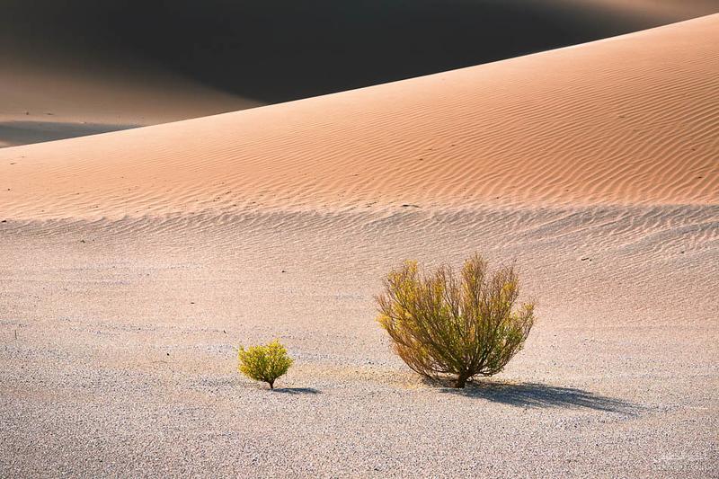 Oman Desert (28).jpg