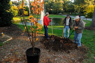 MIlliken Birthday Tree (Beacon Oak)