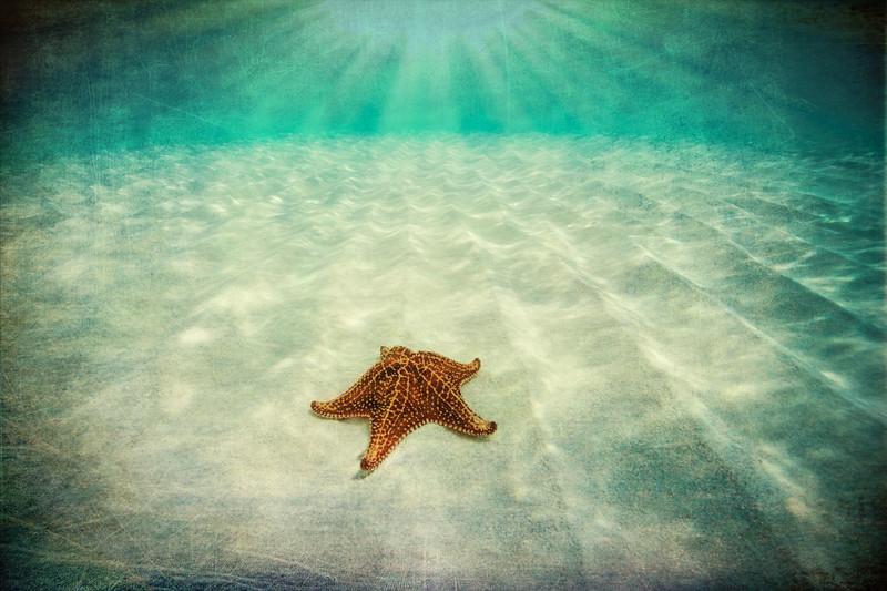Starfish of Bimini Fine Art.jpg