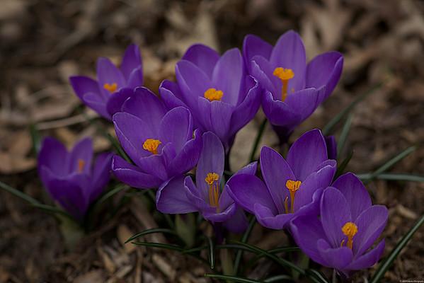 2010 Spring Flowers