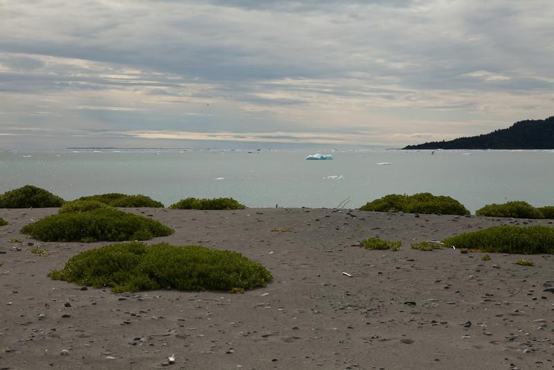 Alaska Icy Bay-4017.jpg