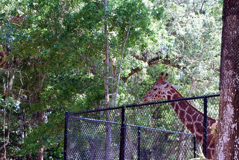2014 Zoo in Sanford, Florida (18).JPG