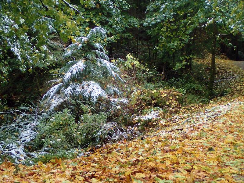 PB030100 Mt Erie winter Fall forest.jpg