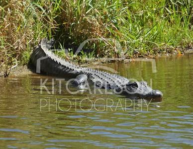 Florida - Myakka River State Park